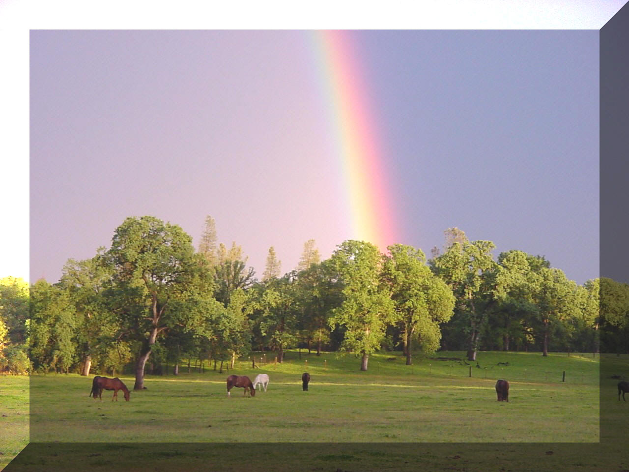 At the end of the rainbow - is the Flying H Ranch