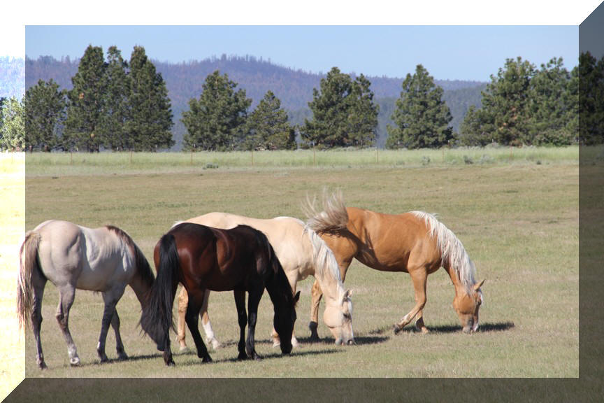 Flying H Ranch Quarter Horses